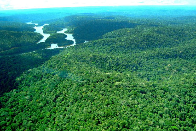 Meio Ambiente - Parques e Florestas - Floresta Mamuru Apiuns mata vegetação flora florestal árvores amazônia