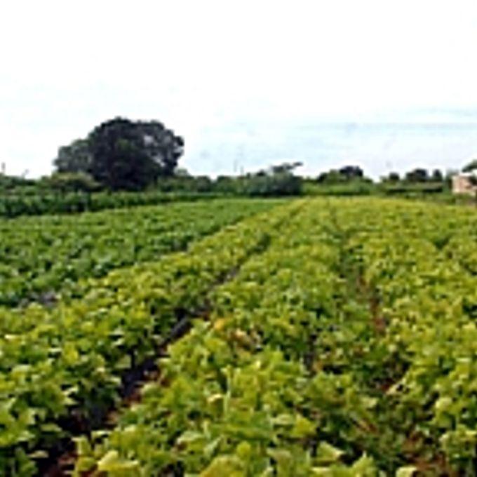 Agropecuária - Plantações - Plantação de produtos orgânicos