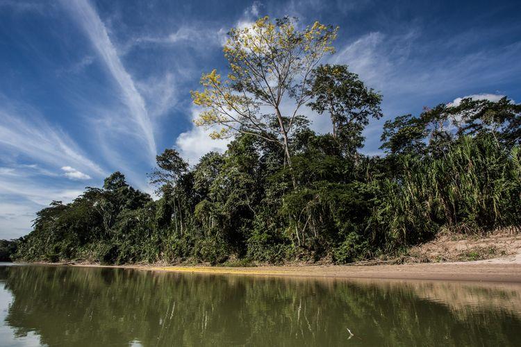 Meio Ambiente - parques e florestas - Acre rios mata Floresta Amazônica Código Florestal bacia hidrográfica preservação ambiental árvores