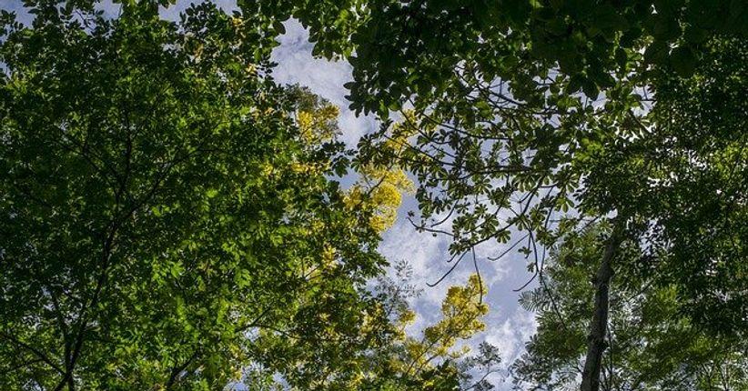 Concessão de florestas públicas