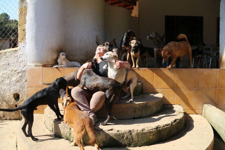 Meio Ambiente - animais e natureza - cachorros cães zoonoses estimação cuidadores abrigos