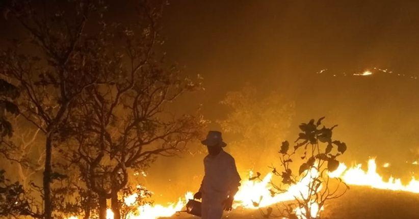 Pantanal e a prevenção de queimadas em 2021