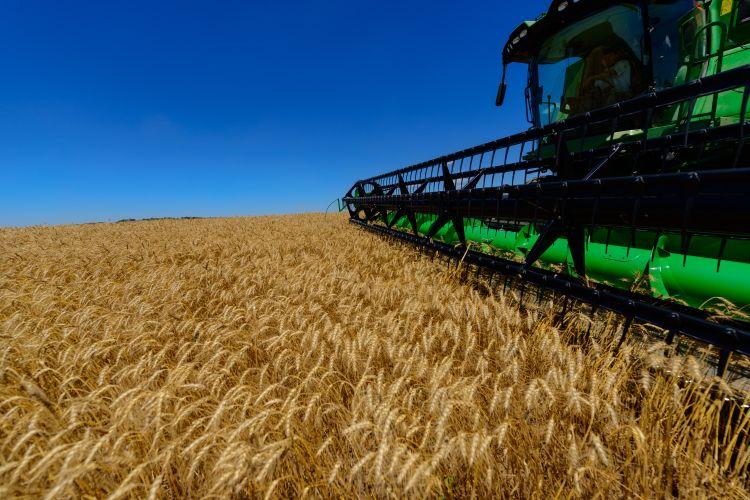 Agropecuária - plantações - agricultura trigo produção agrícola