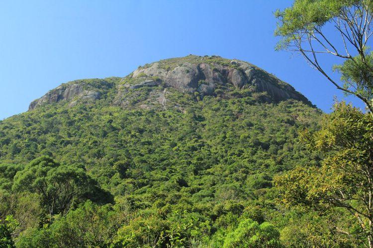 Meio Ambiente - parques e florestas - Código Florestal vegetação