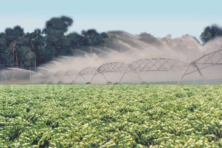 Agropecuária - Plantações - Irrigação