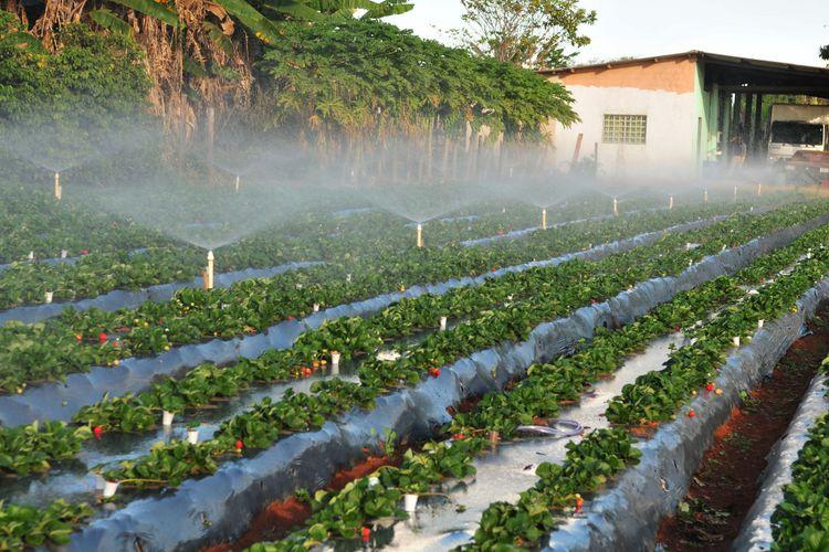Agropecuária - plantações - irrigação recursos hídricos água solo aspersão